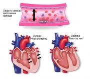 Heart-Diastole & Systole