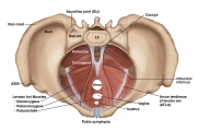 AUGS-Gynecology-4